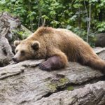 目の下のクマを思わぬ形で目立たなくしてくれた前髪の存在。影クマでお悩みの方にはおススメ。